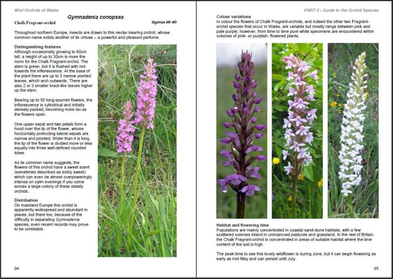 Wild Orchids of Wales-c