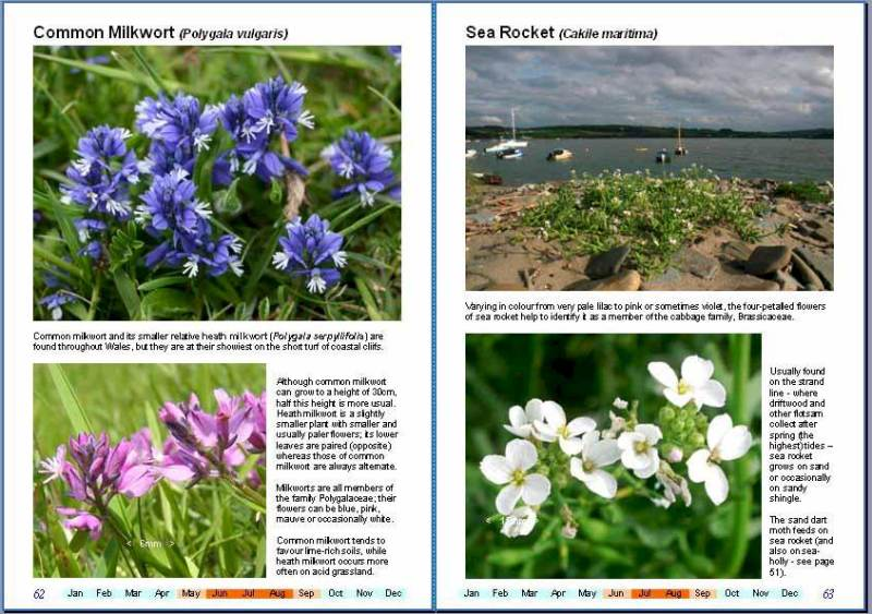 Wonderful Wildflowers of Wales, Volume 2: Seashores and Coastal Cliffs - sample pages