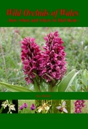 Wild Orchids of Wales - how, when and where to find them, by Sue Parker