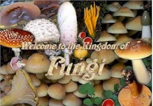 Fungi of the British Isles icon