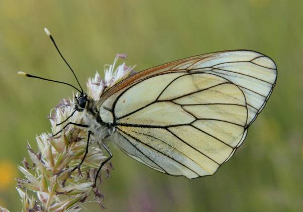 Insects, butterflies, dragonflies, bugs, Britain - Europe