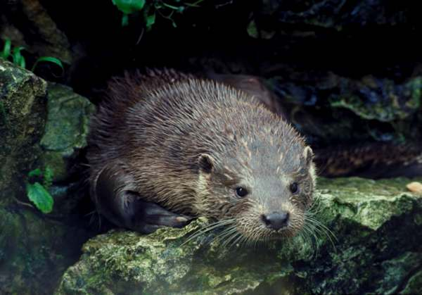 Cant asian river toads habitat I've problem,I