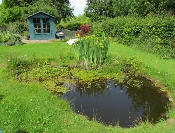 Wildlife Garden Ponds Design Construction Planting
